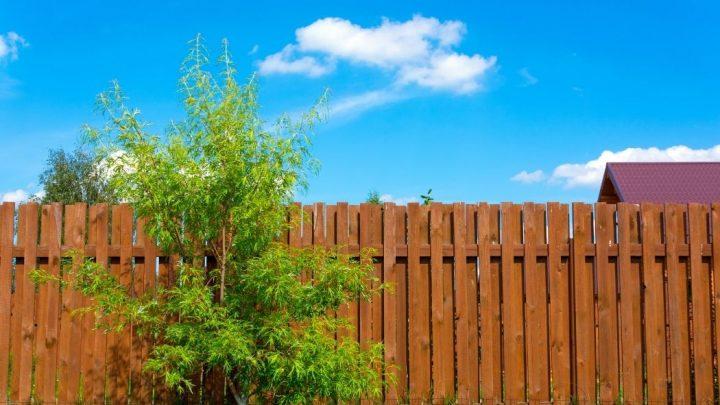 Comment décorer une palissade en bois ?