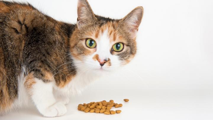 Croquette chat stérilisé : la clé pour bien nourrir votre animal